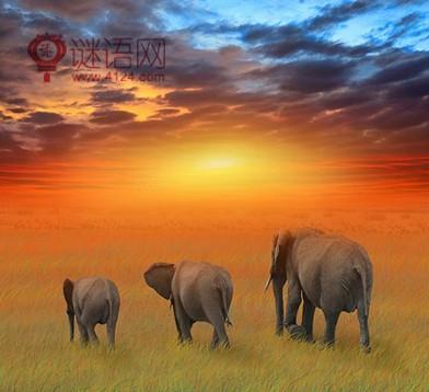 保护野生动物的宣传标语