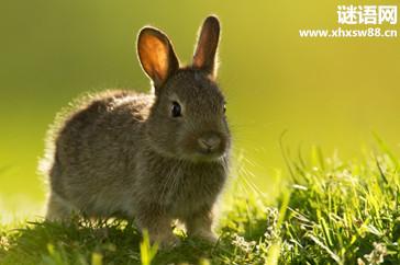 关于兔子的蜗牛苏州谚语产业园图片